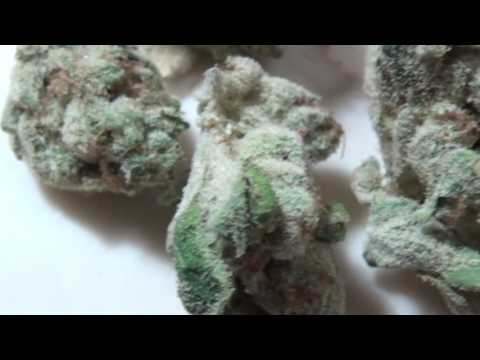 CT WEED REVIEWS #318 Dispensary STRAIN: FRUITY PEBBLES (30% THC)