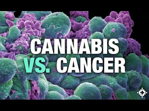 Episode 35: Cannabis Oil Saves Woman with Brain, Lung & Bone Cancer Given 4 – 6 Weeks