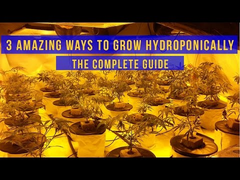 3 Amazing Ways to Grow with Hydroponic Systems – The Complete Guide