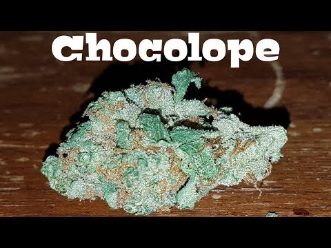 Canadian Cannabis Strain Review – Chocolope By Aurora