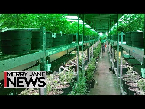 How to Have a Legal Cannabusiness in California | MERRY JANE News