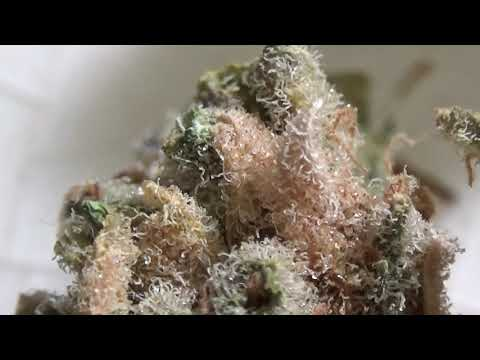 CT WEED REVIEWS #468 Dispensary STRAIN: BLUEBERRY