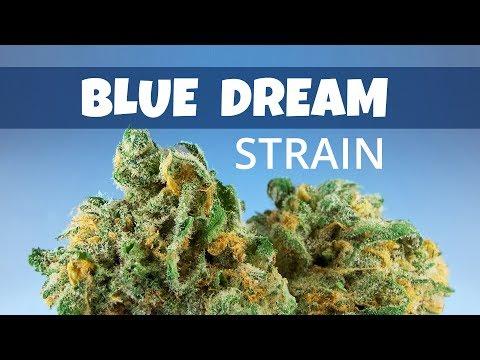 Blue Dream Cannabis Strain [Review]