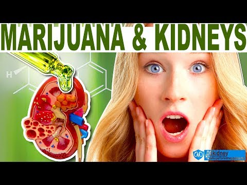 How to Treat Kidney Disease with Medical Marijuana and CBD