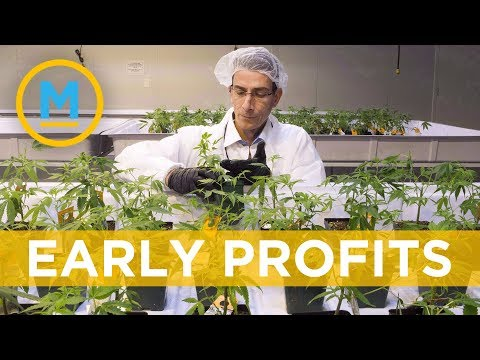 Aurora Cannabis revenue triples in first-quarter | Your Morning