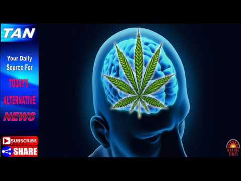 Study Finds Cannabis Reverses Aging Processes in the Brain- health
