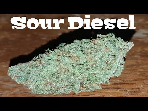 Canadian Cannabis Strain Review – Sour Diesel