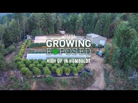 GROWING EXPOSED SEASON 2 EPISODE 4: High Up In Humboldt
