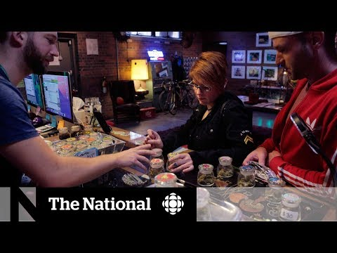 Cannabis tourism looks to flourish but regulations may be holding it back