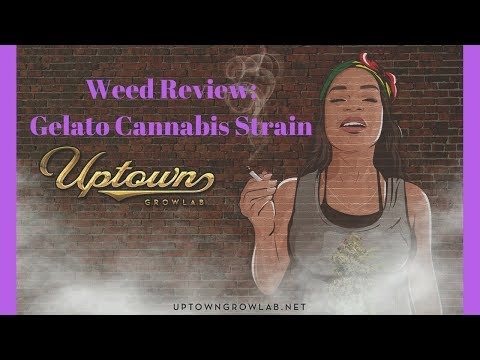 Weed Review: Gelato Cannabis Strain, Marijuana