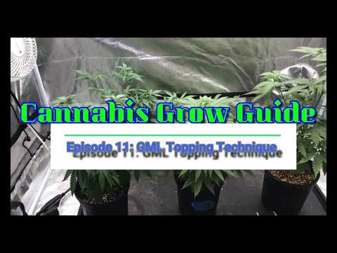Cannabis Grow Guide Ep: 11 The GML Topping Technique