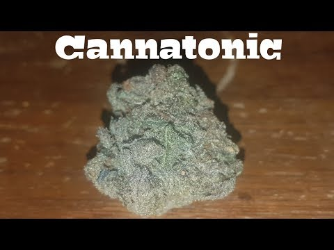 Canadian Cannabis Strain Review – Cannatonic AKA Temple By Aurora