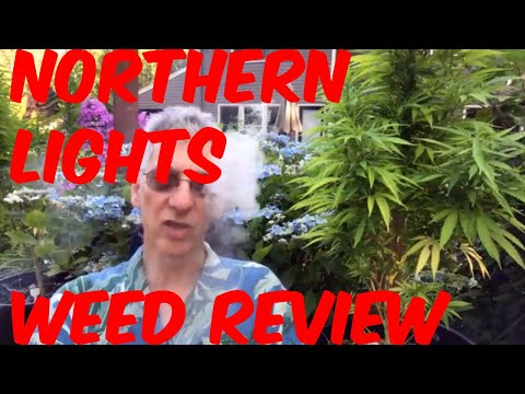 Northern Lights Classic Cannabis Strain Review