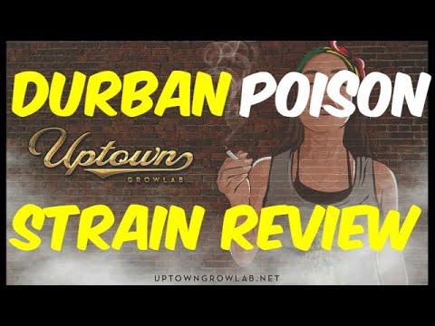 Durban Poison Strain Review: Classic Medical Cannabis Strains