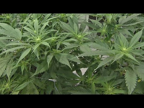 Ohio patients closer to being able to buy medical marijuana