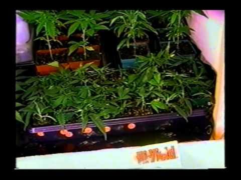 High Times: Sea of Green II *420* How to grow Cannabis