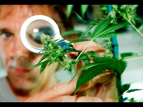 BBC Documentary 2017 – Medical Cannabis: The Wonder Weed – 2017 Full Documentary