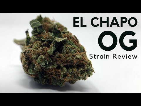 El Chapo OG Cannabis Strain Information & Review