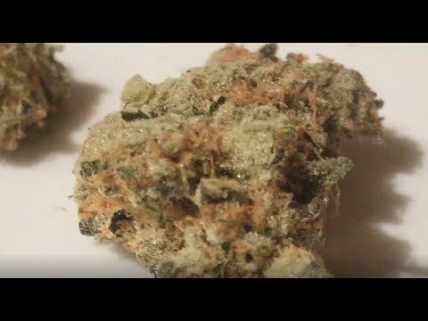 MANGO KUSH – Cannabis Strain Review – by Medizin (Las Vegas) 12/06/2017