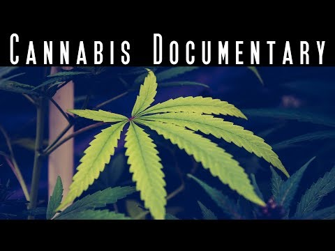 Hemp Heals You – Cannabis Health Benefits Documentary – Best Marijuana Documentary