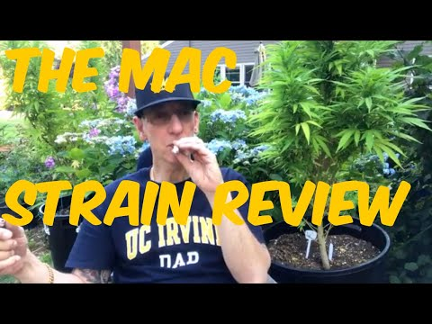 The MAC  Cannabis Strain Review – Grown by Two Tone Willie