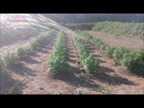 2016 Grow Michigan Medical Marijuana