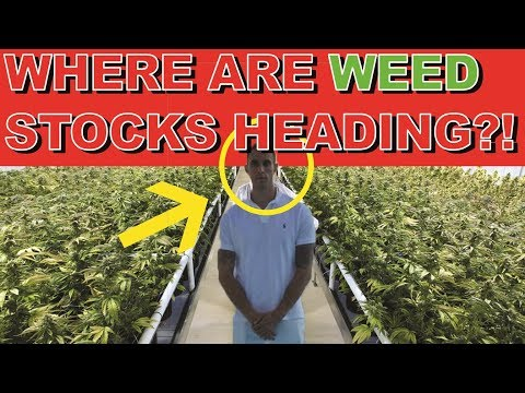 Where are CANNABIS STOCKS heading? G20 Summit, Short Sellers and LEGALIZATION NEWS UPDATES