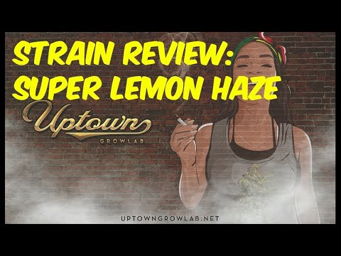 Weed Review Super Lemon Haze Cannabis Strain Review, sativa inidca