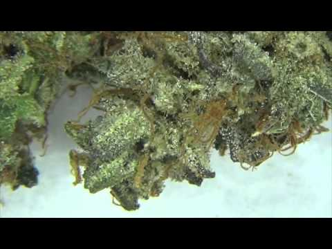 Pink Lady (Broken Coast Cannabis) Medical Marijuana Strain Review