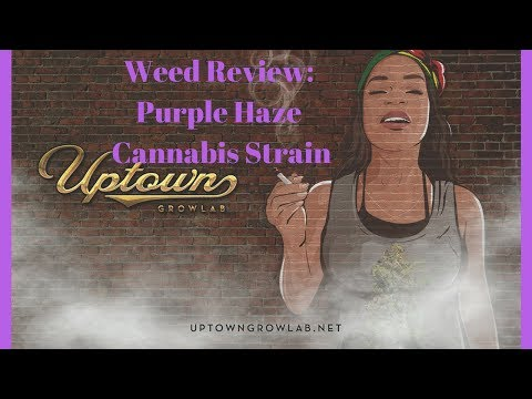Weed Review: Purple Haze Cannabis Strain Review