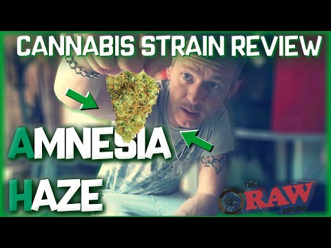 Cannabis Strains In The UK – AMNESIA HAZE – Cannabis Strain Review (Weedview RAW Editions)