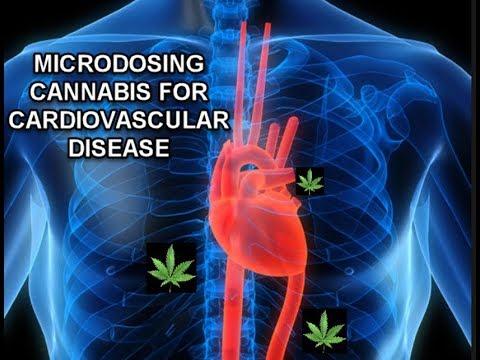 Microdosing Cannabis For Heart Disease And Cardiovascular Health