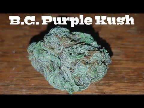 Canadian Cannabis Strain Review – B.C. Purple Kush