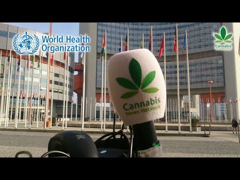 WHO Stuck Between Politics to Reschedule Cannabis within the UN | Cannabis News Network