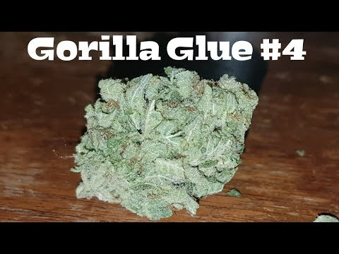 Canadian Cannabis Strain Review – Gorilla Glue #4