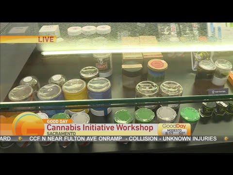 Cannabis Council