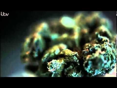 EXPOSURE – Britain's Booming Cannabis Business