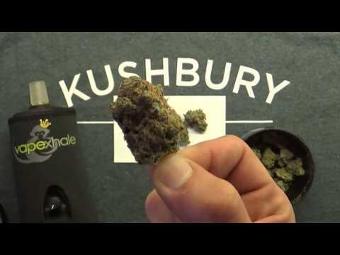 Stokes (Aurora Cannabis) Medical Marijuana Strain Review