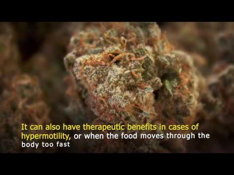 Cannabis For Gut Health and Indigestion