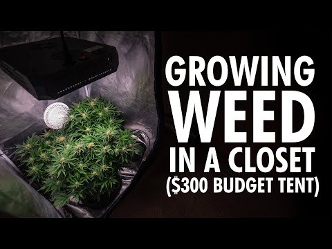 Growing Weed In A Closet – $300 Budget Autoflower Grow