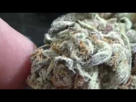 CT WEED REVIEWS #419 Dispensary STRAIN: MENDO BREATH (27% THC)