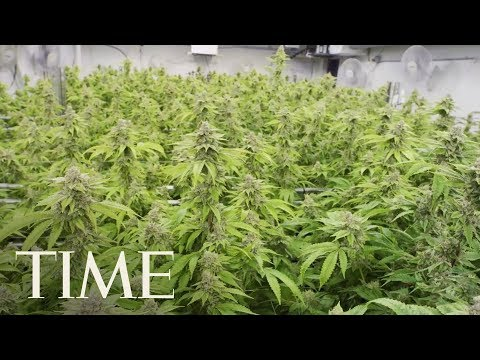 Thailand's Legislature Has Approved Legalizing Medical Marijuana   TIME