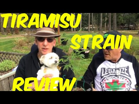 Tiramisu Cannabis Strain Weed Review