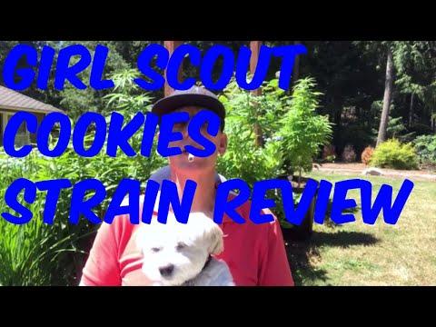 Girl Scout Cookies Marijuana Cannabis Weed Strain Review