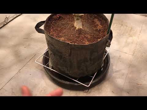 How to Grow Monster Medical Marijuana