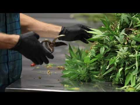 Liberty Health Sciences Medical Cannabis