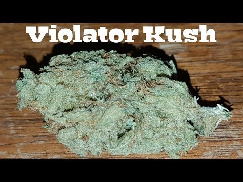 Canadian Cannabis Strain Review – Violator Kush