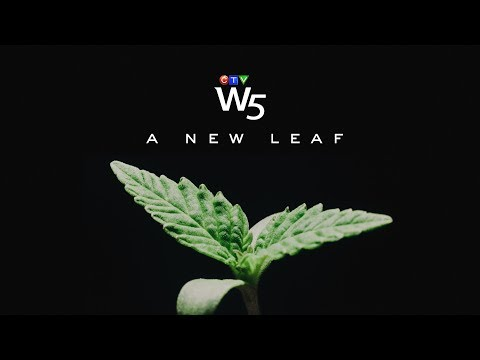 W5: Finding opportunities in the growing marijuana industry