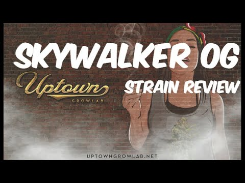 Skywalker OG Cannabis Strain Review: Medical Marijuana