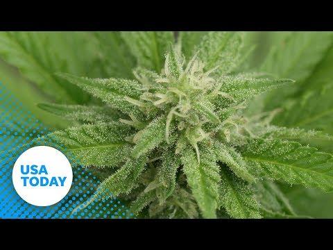 Canada to start legal Marijuana sales